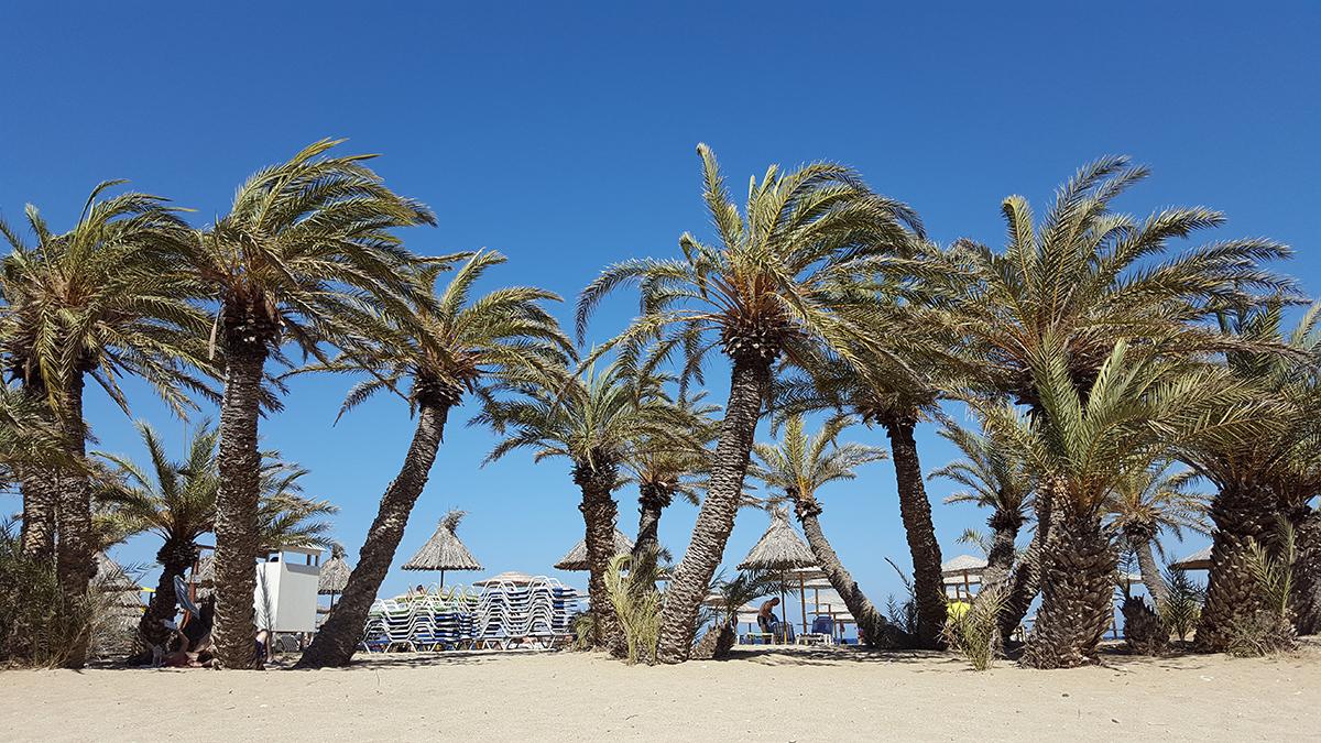 Bild: Griechenland, Kreta, Urlaub, Strand, Meer, Crete, Greece, Travel, Insel, Reiseblog, Via Beach, Palmenstrand
