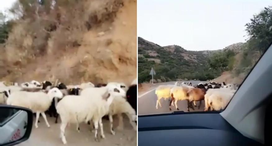 Bild: Kreta, Griechenland, Ziegen, Gebirge, Rundfahrt, Griechenland, Reisebericht, schönsten Urlaubserinnerungen